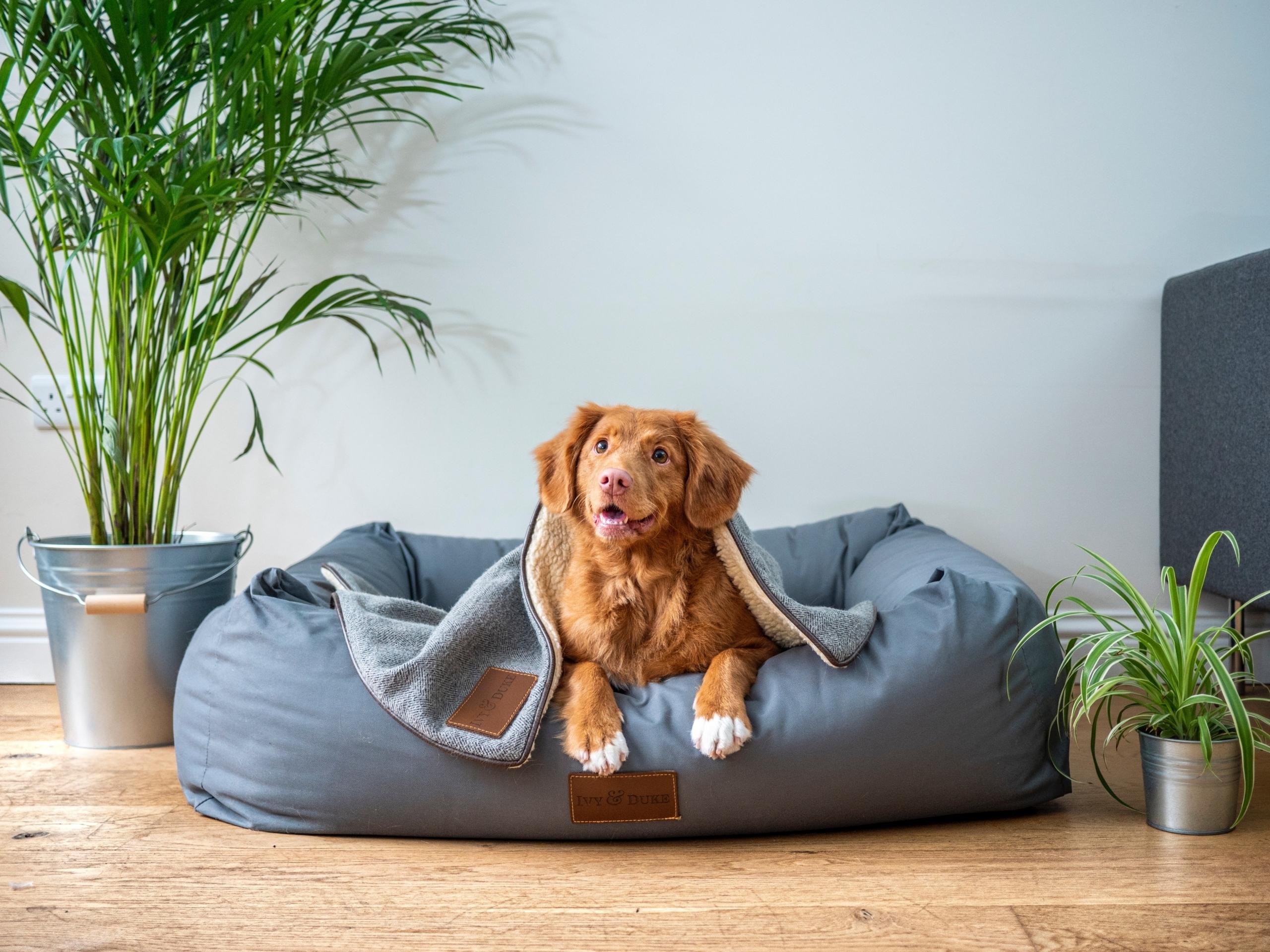 Brand Loyalty Dog